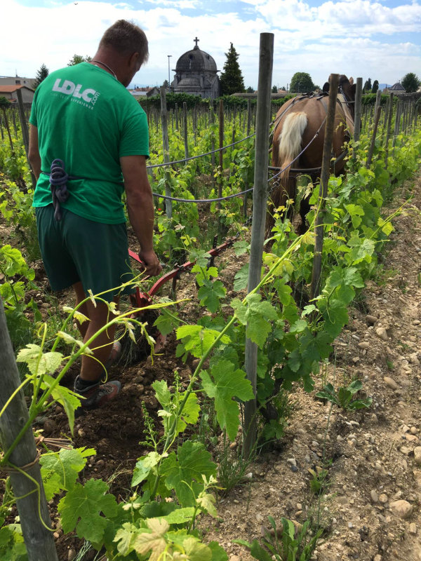 L'entretien des vignes