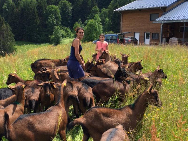 Les chèvres alpines chamoisée