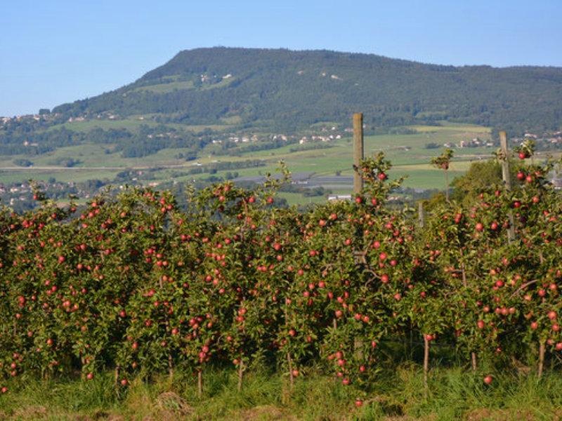 Val'Fruit pommier