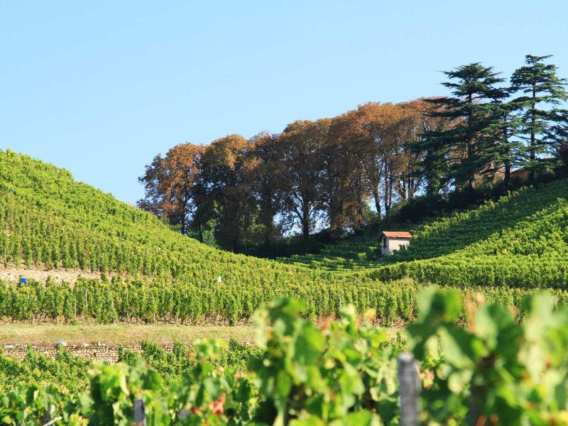 Les vignes de Tain-l'Hermitage
