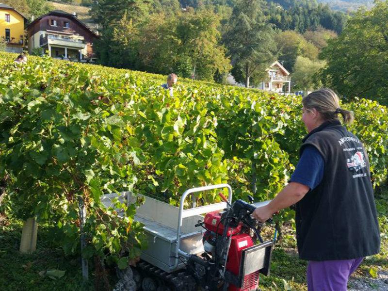 La récolte du vin