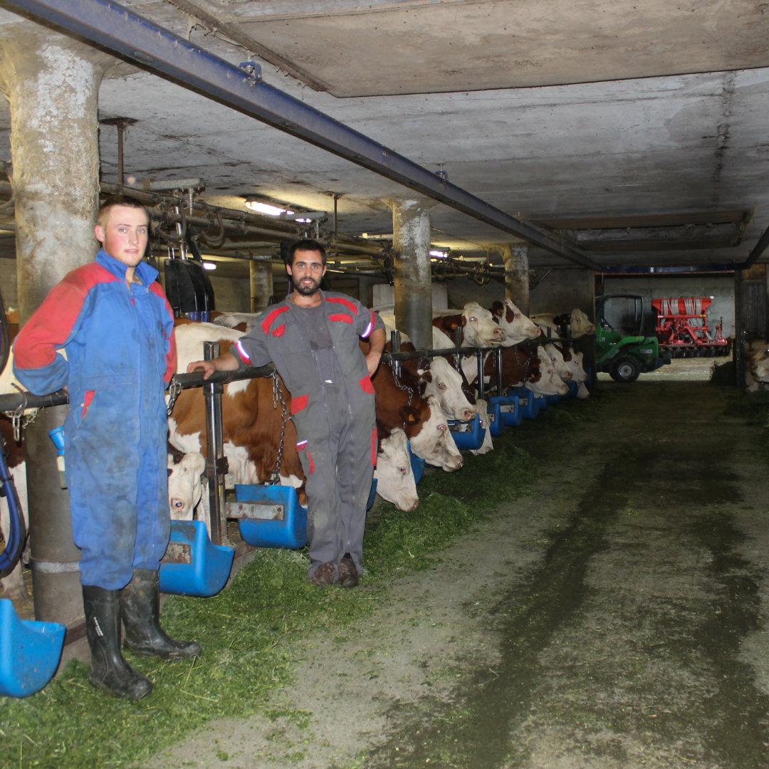 La coopérative laitière de Domancy