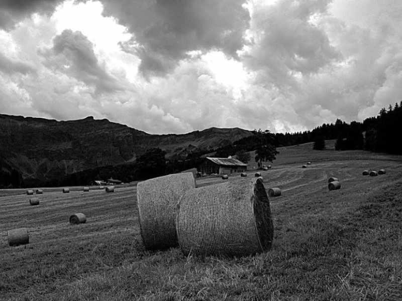 GAEC Les Alpagistes 06