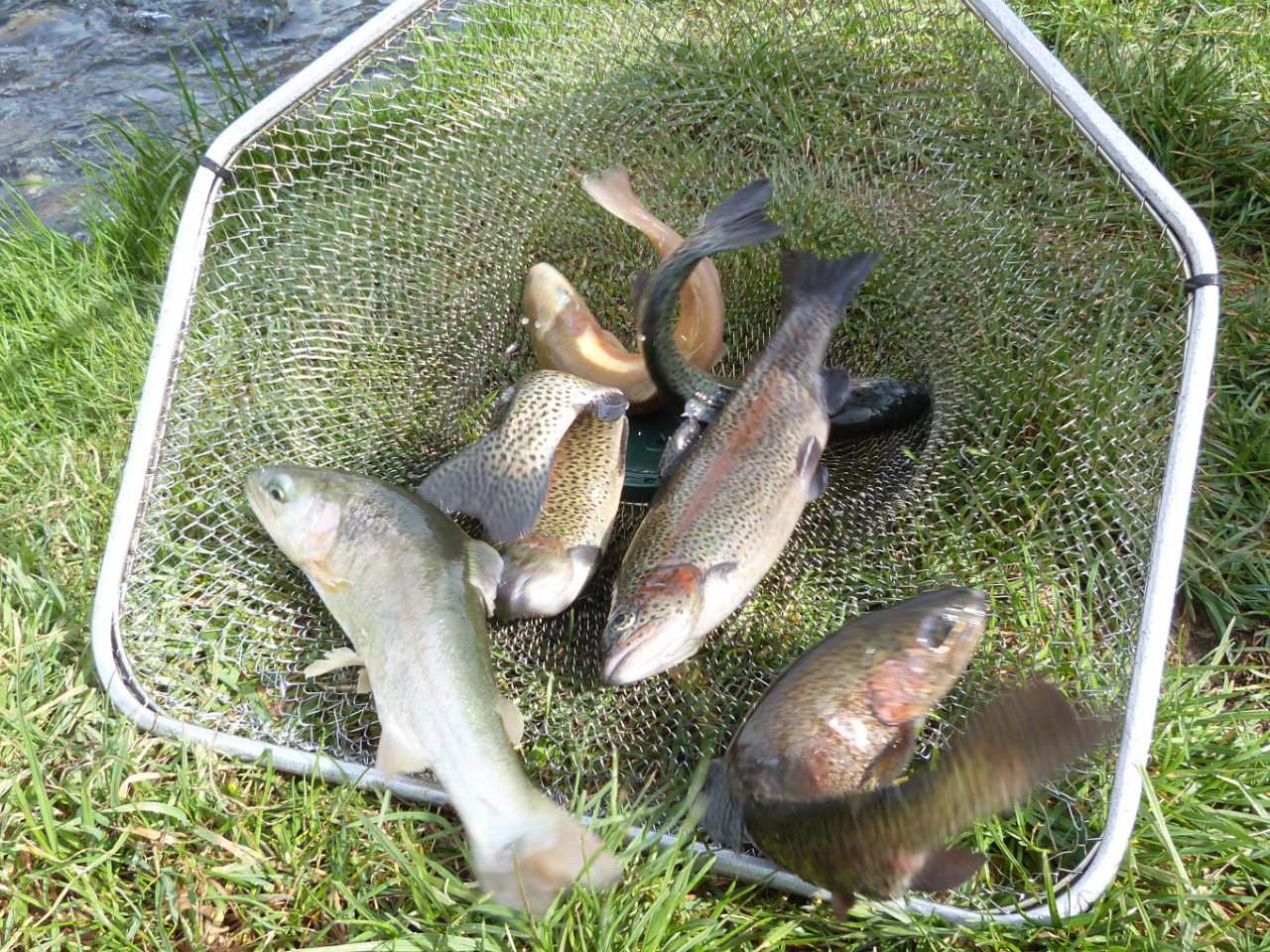 La pêche des ombles